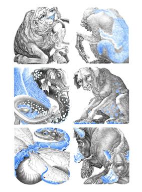 Kínai fauna web